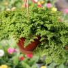 «Зеленый» питомник Вертоград – все краски природы в одном уголке!